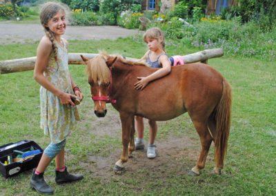 Activiteiten, pony verzorgen